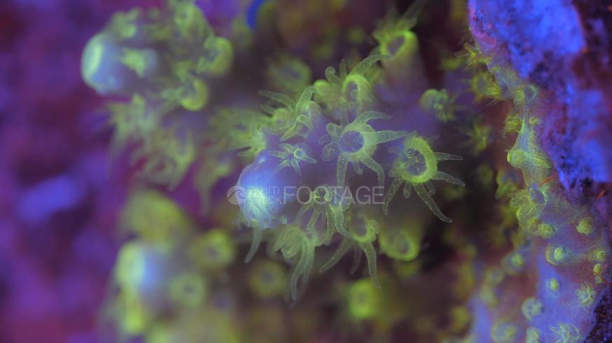 Banque d'images sous marines, la fluorescence des coraux